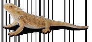 COLLECTA Barzdotasis drakonas (driežas) (L) 88567